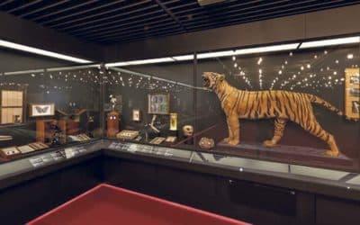 Le Musée d'histoire naturelle: 200 ans et toujours jeune !